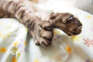 猫 引っかかれた ミミズ腫れ