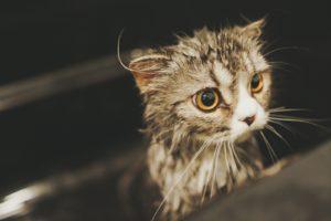 猫 水 手でかく