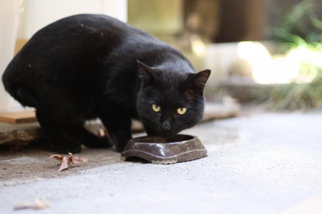 猫 ご飯 喋る