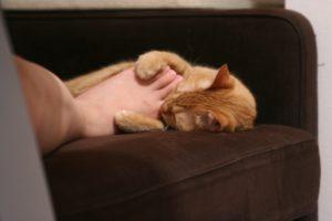 猫 寝てる時 足噛む